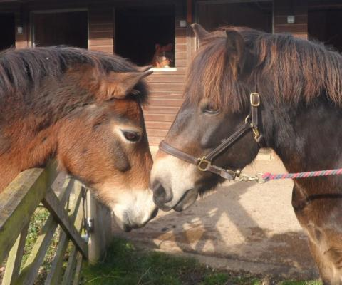 two of the horses saying hello to each other with their noses